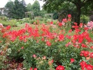 Der Kurpark Bad Wörishofen Blütenpracht